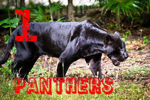 edited-PANTHER-shutterstock_117579169-WEBONLY